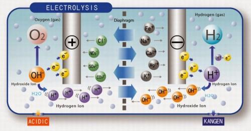 kangen-electrolysis-kangen-water-beauty-water